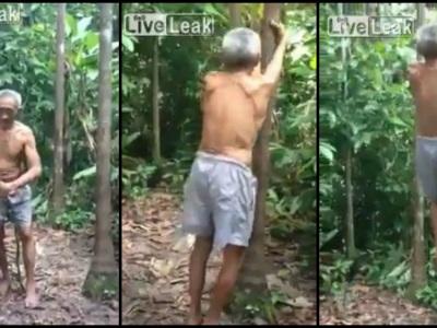 Like a boss: Starý dedo vyliezol na strom ako mladá veverica